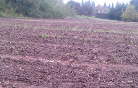 קרקע חקלאית